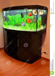 fish tank aquarium stock vectorish tankree game online screensaver