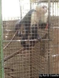 Visit Jamaica Zoo Ad lib Traveller blog