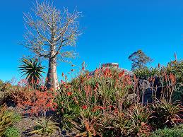 Brisbane City Botanic Gardens by Tropical Display Dome Brisbane City Council