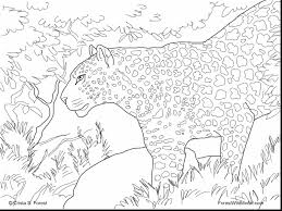 fabulous animal drawings coloring pages coloring pages
