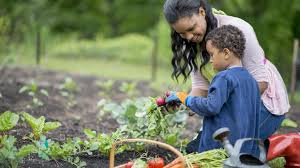Tips For A Dazzling Smile by 5 Tips For Vegetable Gardening In The Pacific Northwest Parentmap