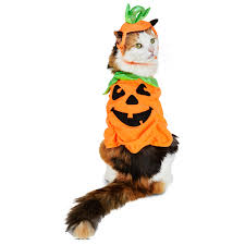 the cutest pet halloween costumes for cats and dogs