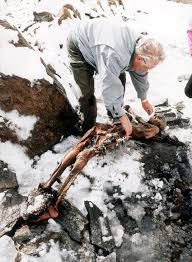 Carbon    C  dating method   Eniscuola The body of the Similaun man  at the site where it was found in