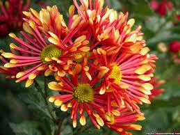 வால்பேப்பர்கள் ( flowers wallpapers ) - Page 3 Images?q=tbn:ANd9GcRbjjQomxEIcePX5_faVvhsA-wfDvqYxhFwbAcfMoFFCc_G4_IK