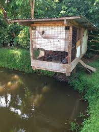 Home Decorators Collection Coupon Code Chicken Coop Greenhouse 63 With Chicken Coop Greenhouse Amhtxy Com