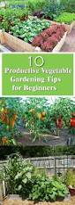 Manure For Vegetable Garden by Best 25 Spring Vegetable Garden Ideas On Pinterest Organic