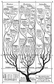 Mental Map Definition Orthogenesis Wikipedia