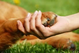 Projeto inovador incentiva adoção de animais em Dois Irmãos ( RS ...