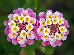 வால்பேப்பர்கள் ( flowers wallpapers ) - Page 2 Images?q=tbn:ANd9GcRcxAugsS3Aa7DXpmjI4BElXoCCAqR2G3gWXjqhrohBboswpr6qMg