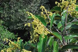 <b>Drought</b> May Trigger Mass Flowering In Borneo&#39;s Forests - Science <b>...</b>