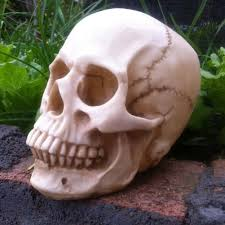 Halloween Skeleton Props by Online Get Cheap Halloween Skeleton Props Aliexpress Com