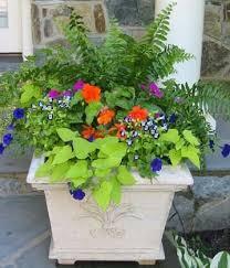 1580 best flower garden and indoor plants images on pinterest
