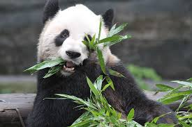 The greatest things to do in Toronto for visitors and locals Time Out Play with the pandas