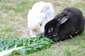 Radio New Zealand   National   Programmes   This Way Up Radio New Zealand Over the past    months  Chrissy Joy and the other volunteers from Wellington Rabbit Rescue have saved and found new homes for hundreds of sick and
