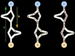 Ant Colony Algorithms   A Positronic Brain A Positronic Brain   WordPress com