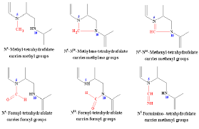 One very important reaction which utilizes folate is the synthesis of deoxythymidylate  dTMP   one of the four deoxyribonucleotides required for DNA