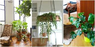 house plants 15 beautiful house plants that can actually purify