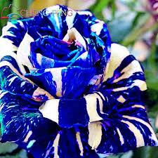aliexpress com buy blue adenium obesum seeds rare beautiful