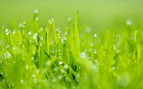 Neon Green Wallpaper by Bright Green Grass Cool Wallpapers