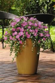 best 25 outdoor flower pots ideas on pinterest outdoor potted