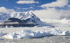 BBC Nature   Antarctic wildlife Antarctic wildlife