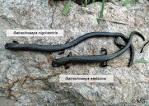 Image result for Batrachoseps robustus