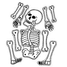 skeleton pictures for kids free download clip art free clip