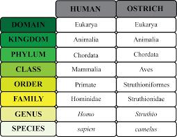 organism definition u0026 explanation video u0026 lesson transcript