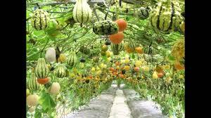home vegetable garden ideas garden trends