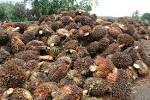 สมาชิก เกษตรกรชาวสวนปาล์มน้ำมัน จำนวน 30 สหกรณ์ในจังหวัดกระบี่ ...