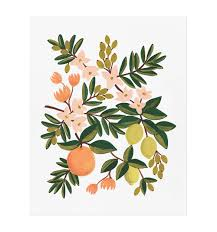citrus floral art print by rifle paper co made in usa