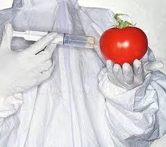 здоровое питание, без ГМО, помидор
