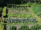 jardin potager 1