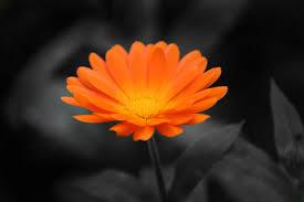 Foto från webben