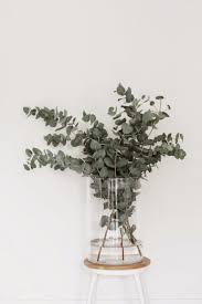 best 25 vases ideas only on pinterest plant decor vase ideas