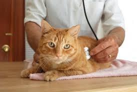 Saiba o que é a AIDS felina e o que fazer para prevenir - ANDA ...
