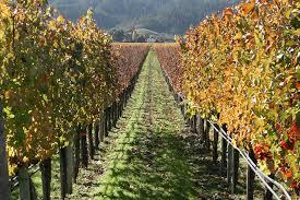 Zimsko prskanje vinograda Images?q=tbn:ANd9GcRoQMDHOfLsAVSKdk9sk6-BqcGoaN_Ngzq9J8uFlN-bOKECY6Tx