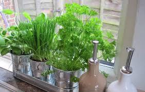 herb garden kitchen picgit com