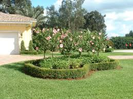 66 best projects to try images on pinterest florida landscaping