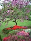 فصل الربيع Images?q=tbn:ANd9GcRq08L-zWiPgleCR9SPeFmG95Sh20ZBO8JV6_nLLH_rhLsxteUV3L7f3Pk