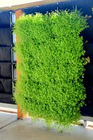 Vertical Garden Vegetables by 23 Best Florafelt Pro System Images On Pinterest Living Walls