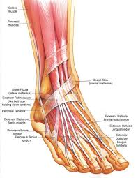 ankle injuries | podiatrist boca raton