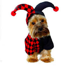 Dog Costumes Halloween 25 Funny Images