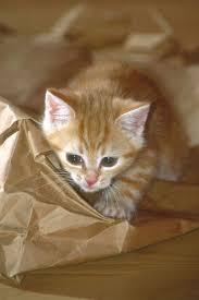 اجمل صور قطط في العالم Images?q=tbn:ANd9GcRqnf3rtVy7k2UUyRr5mWkNOQ0Wy73x8Try77WxFxdJunGWnKcr