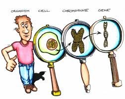 DNA, genes, chromosomes