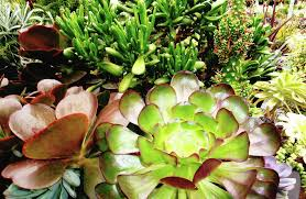 Succulents Pots For Sale by Succulent Close Ups Greenworld Greenhouses