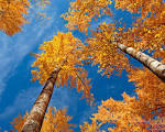Wallpapers Backgrounds - Autumn Wallpaper 39
