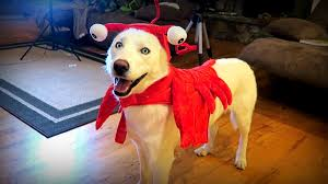 10 cool dog halloween costumes test youtube