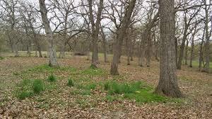 White Oak Bark Home