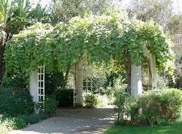 10 reasons you should be growing grapes in your backyard monrovia